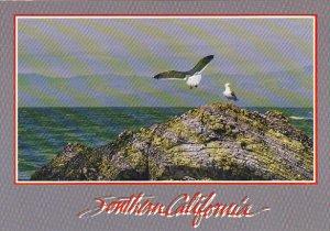 Rocky Shores Pacific Coast Southern California