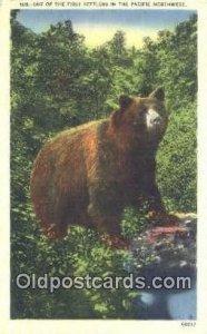Pacific Northwest Bear Unused light wear