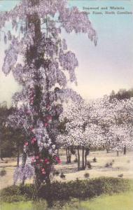 North Carolina Southern Pines Dogwood And Wisteria Albertype