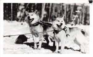 Alaska AK Real Photo RPPC Postcard c1950 SLED DOGS Alaska