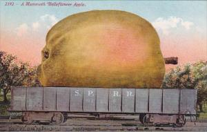 Exageration Mammoth Belleflower Apple On Railway Car