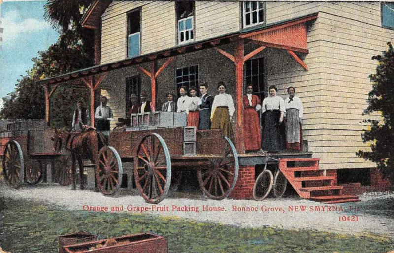 New Smyrna Florida Orange and Grape Fruit Packing House Vintage Postcard AA389
