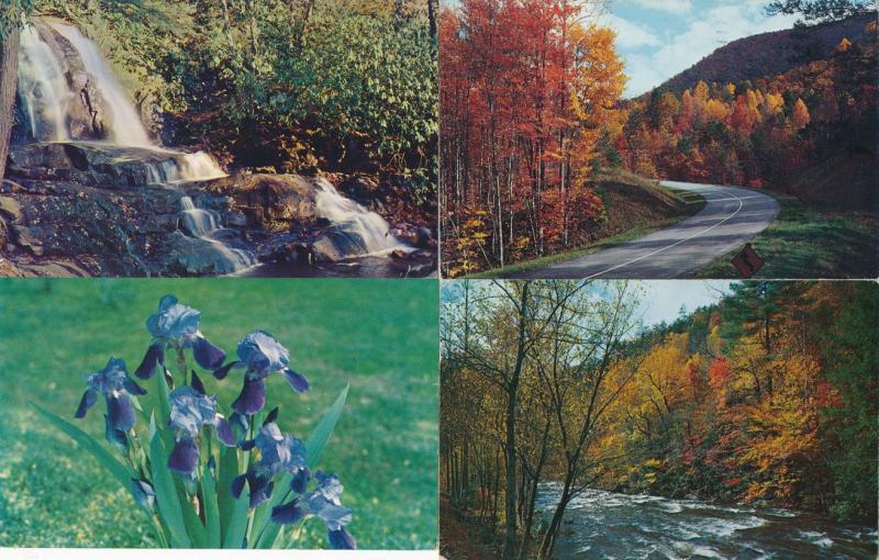 (4 cards) Smoky Mountains Tennessee or North Carolina - Laurel Falls Purple Iris