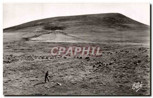 Puy de Dome - Auvergne - Pasture in Mountain - Moton - sheep - Old Postcard