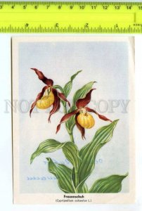 420843 GERMANY flowers orchid Vintage Tobacco Card w/ ADVERTISING