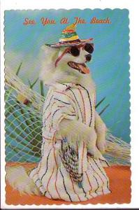 Dressed Dog with Sunglasses, See You At The Beach, Dexter Color