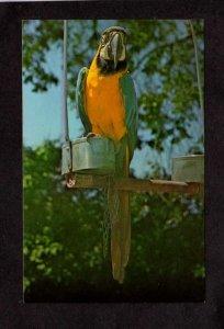 NH Benson Animal Farm Amusement  Park Hudson New Hampshire Postcard Parrot Birds