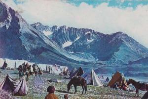 Panch Tarni Mountains Kashmir Tribe Cattle India Indian Postcard
