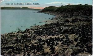 PRIBOLOF ISLANDS, AK Alaska     SEALS on the ISLANDS    1919   Postcard