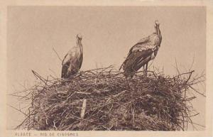 France Alsace Nid De Cigognes Storks
