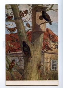 178118 GERMANY Bird hunting blackbirds and house sparrow #142