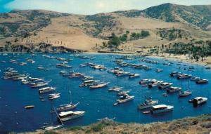 USA The Isthmus Cove Catalina Island California 02.39