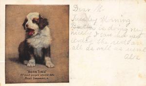 Hood's Sarsaparilla Born Free Dog 1909 Advertising Postcard