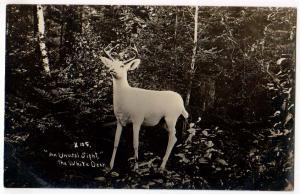 RPPC, White Deer