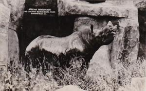 Illinois Chicago Zoological Park At Brookfield African Rhinocerus Real Photo