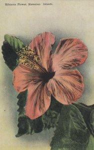 Hibiscus Flower , Hawaiian Islands , 00-10s