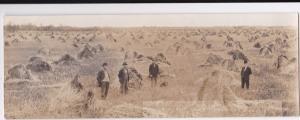 RP: Men in Field at Harvest time , ROSTERN , Saskatchwan , Canada , 00-10s