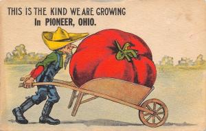 The Kind We Are Growing in Pioneer Ohio~Hick Farmer~Exaggerated Tomato~1914 PC