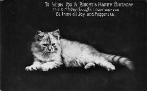 Cat Katze Chat To Wish You a Bright & Happy Birthday Joy and Happiness 1913