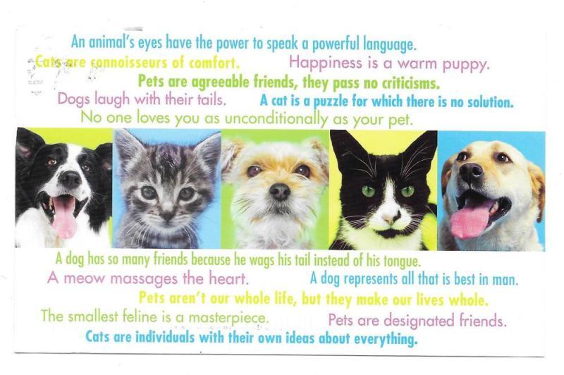 Modern Advertising Postcard Veterinarian Appt Reminder 2008
