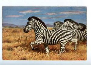 160628 HUNT ZEBRA in Savannah Vintage Colorful PC
