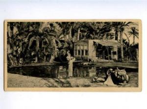 156067 EGYPT SUEZ CANAL Wells of Moses Vintage photo postcard