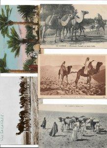 North Africa Morocco, Algeria Tunisia Egypt Postcard lot of 15 01.12