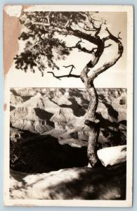 Postcard AZ Arizona Tree at Grand Canyon Real Photo RPPC K23