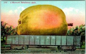 1910s California Ag EXAGGERATION Postcard A Mammoth BELLFLOWER APPLES Mitchell
