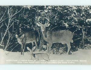 Old rppc DEAR AT EARLEY'S CAMP Guilford Maine ME HM4052-22