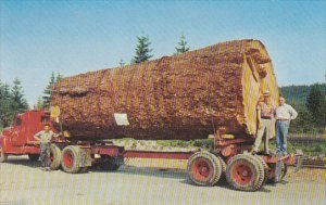 Giant Foir Log On Back Of Truck In Oregon