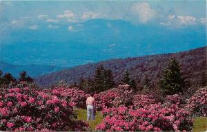 Rhododendron Garden Roan Mountain North Carolina NC Tennessee TN Postcard
