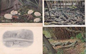 Alligators 4x Vintage American Postcard s
