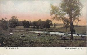 SEAFORTH , Ontario, Canada, 1908 ; The Woodlands