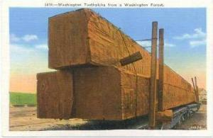 Washington Toothpicks From A Washington Forest, Washington, 1930-1940s