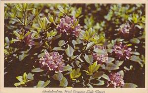 State Flower In Full Bloom Rhododendron West Virginia 1963