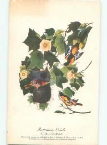 1950's BALTIMORE ORIOLE BIRD AC7064
