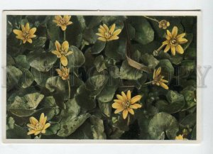 428078 Flower Ranunculus Ficaria Vintage Sammelwerk Tobacco Card w/ ADVERTISING