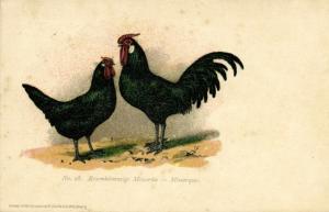 Chicken Hen Rooster, Rosenkämmige Minorka, Minorque (1910s) No. 28