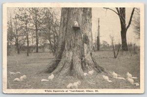 Olney Illinois~Larchmont Harvey D Hays Home~White Squirrels at Feeder~1940s B&W