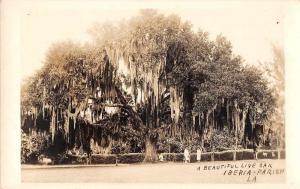 Iberia Parish Louisiana view of people under live Oak real photo pc Z39275