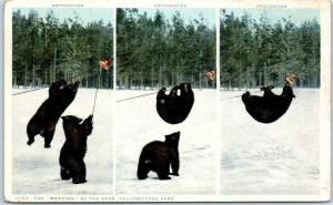 Yellowstone Park Postcard The Meating of the Bear Detroit Pub. 1910s UNUSED