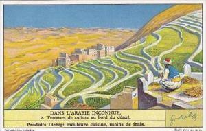 Liebig Vintage Trade Card S1307 Undiscovered Arabia 1935 No 2 Terrasses de cu...