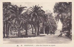 France Perpignan Allee des Palmiers au square