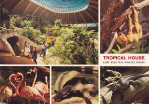 Tropical House , Assinibone Park , Winnipeg , Manitoba , Canada , 60-80s