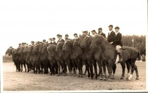 Horse Sport Emmeloord Real Photo 03.00