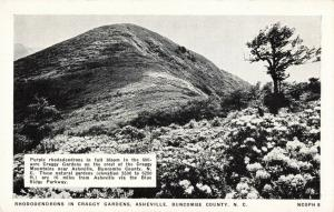 Postcard Rhododendrons in Craggy Gardens Asheville North Carolina