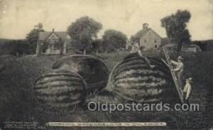 Watermelons in Oklahoma, USA Exaggeration Old Vintage Antique Postcard Post C...