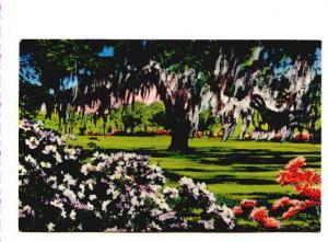 Airlie Gardens, Wilmington,  North Carolina,