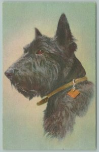 Dogs~Scotch Terrier~Black Wiry Coat~Chocolate Brown Eyes~Collar With Square Tag